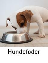 Hundefoder til hund
