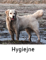 Hundehygiejne til hund