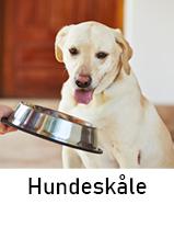 Hundeskåle til hund