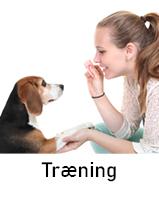 Træning af hund