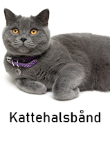 Kattehalsbånd