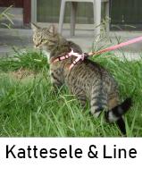 Kattesele og katteline